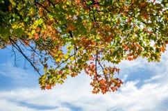 在蓝天前面的秋叶与云彩 免版税库存照片