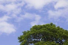 在蓝天和云彩背景的绿色树上面线在summe 免版税库存照片