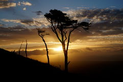 在蓝天和日落背景的树 库存图片