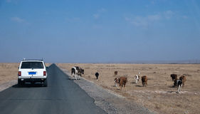 在蓝天和白色云彩内蒙古浑善达克桑迪土地下 库存图片