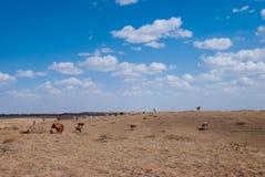 在蓝天和白色云彩内蒙古浑善达克桑迪土地下 免版税图库摄影