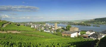 在蓝天庄严视图下的莱茵河谷在Rudesheim。 免版税库存图片