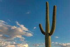 在蓝天的一棵巨型柱仙人掌在巨人柱国家公园,在图森附近 库存照片