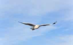 在蓝天的一次白色海鸥飞行 免版税库存照片