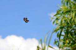 在蓝天的一点颜色蝴蝶飞行 图库摄影