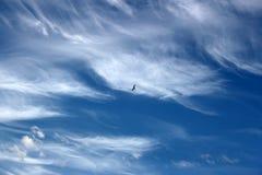 在蓝天的云彩与一只小的鸟 库存图片