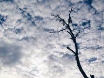 在蓝天的偏僻的树 免版税图库摄影