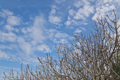 在蓝天的冬天裸体树 免版税库存图片