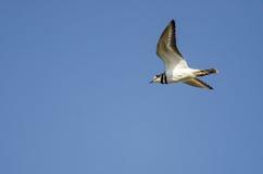 在蓝天的孤立双胸斑沙鸟飞行 免版税图库摄影