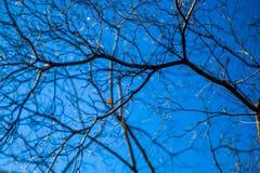 在蓝天的干燥分支 免版税库存图片