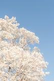 在蓝天的斯诺伊树梢 免版税库存照片