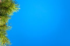在蓝天的杉木分支 库存图片