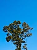 在蓝天的树作为背景。 库存照片
