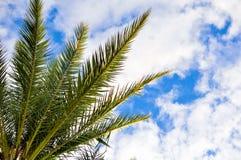 在蓝天的棕榈树上面 免版税库存图片