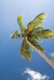 在蓝天的棕榈树与白色云彩 免版税图库摄影