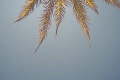 在蓝天的棕榈树分支 库存照片
