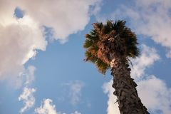 在蓝天的棕榈树 库存图片