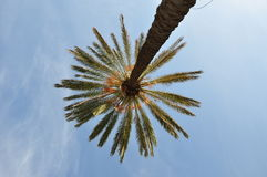 在蓝天的棕榈树 库存照片