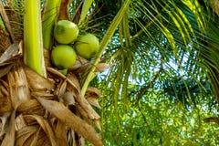 在蓝天的椰子叶子 库存照片