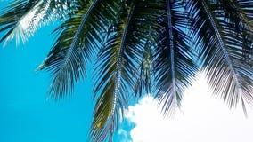 在蓝天的椰子树叶子 图库摄影
