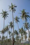 在蓝天的椰子树 免版税图库摄影