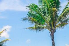 在蓝天的椰子树 免版税库存照片