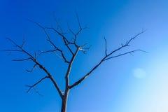 在蓝天的死的干燥树 死亡和活概念 免版税库存图片