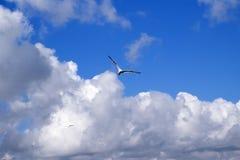 在蓝天的海鸥与云彩 免版税库存照片