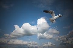 在蓝天的海鸥 免版税库存照片