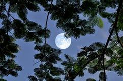在蓝天的满月与叶子在晚上 免版税库存图片