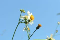 在蓝天的白花 免版税库存图片