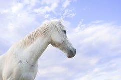 在蓝天的白马 免版税库存图片
