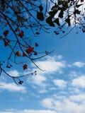 在蓝天的秋天叶子 免版税库存照片