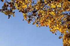在蓝天的秋天黄色叶子 免版税库存图片