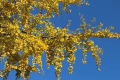 在蓝天的秋天 免版税库存图片