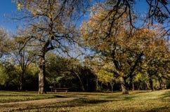在蓝天的美丽的树 库存图片