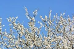在蓝天的美丽的花 免版税图库摄影