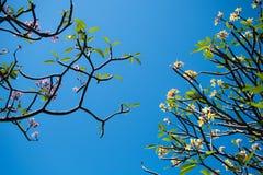 在蓝天的羽毛 图库摄影