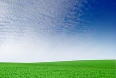 在蓝天的背景的绿色领域。 免版税库存图片