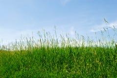 在蓝天的草 库存照片