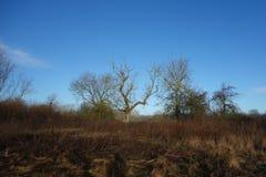在蓝天的被践踏的自然 免版税库存照片