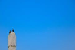 在蓝天的鸟 免版税库存图片