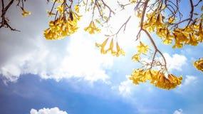 在蓝天的黄色花 库存图片