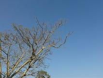 在蓝天的结构树 免版税库存图片