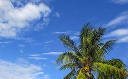 在蓝天的水母云彩 图库摄影