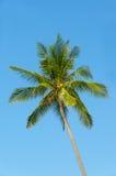 在蓝天的绿色棕榈树 免版税库存照片