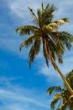在蓝天的绿色棕榈 库存照片