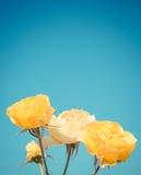 在蓝天的黄色玫瑰 免版税库存照片
