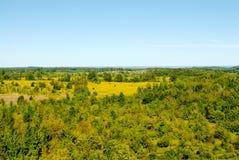 在蓝天的黄色秋天风景 库存照片