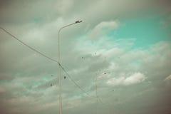 在蓝天背景与白色云彩的鸟在所有5只鸟飞行五他们,可能乌鸦或鸽子 图库摄影